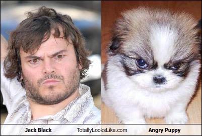 Black / Dog